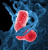 bacteria-811861_1280