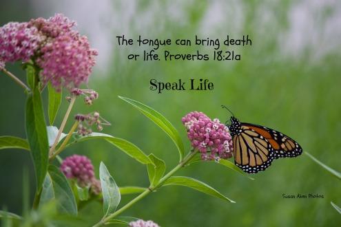 IMG_speak life8076